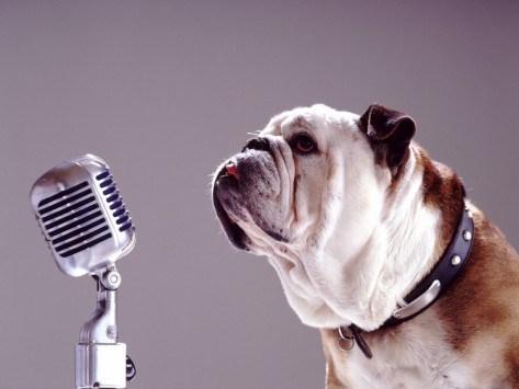 bully mic